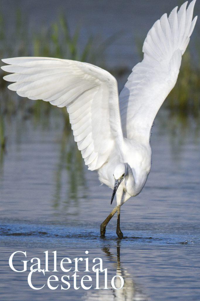 cartolina-uccelli-fronte